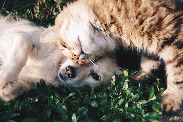 produits veterinaires
